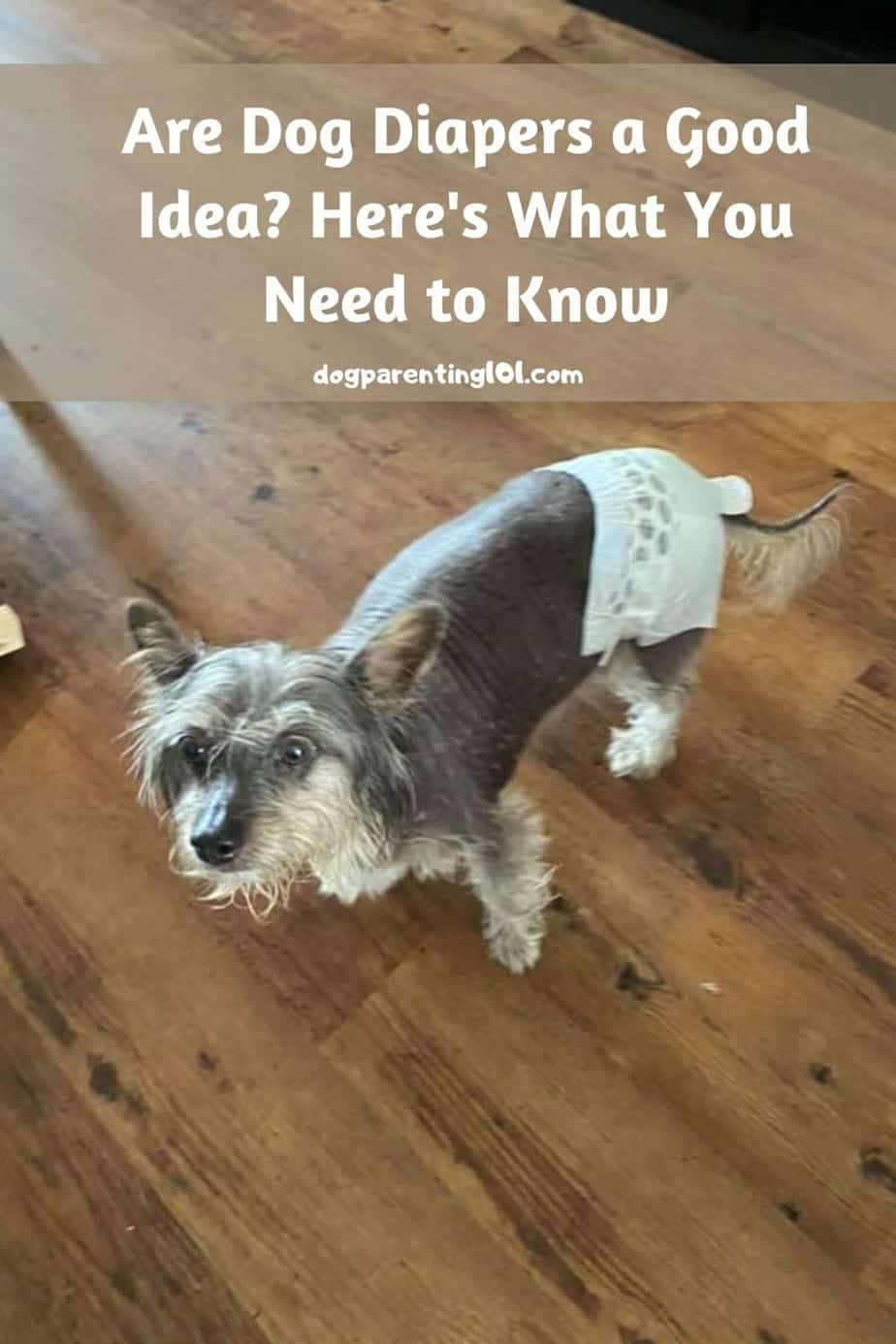 Are Dog Diapers a Good Idea_ Here is What You Need to Know
