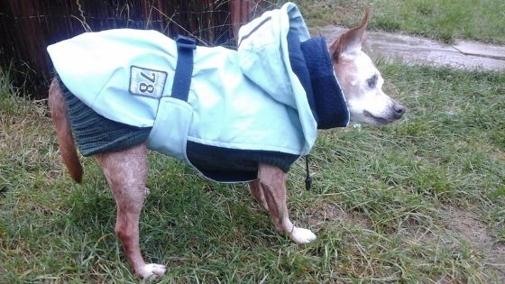 How to exercise your senior dog in the winter