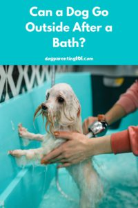 can a dog go outside after a bath