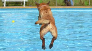 Can a dog swim in a pool with a liner
