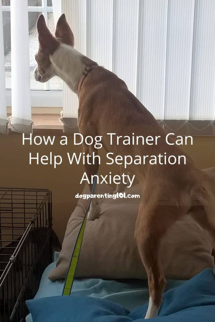 How a Dog Trainer Can Help With Separation Anxiety