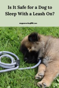 Is it Safe For a Dog to Sleep With a Leash On