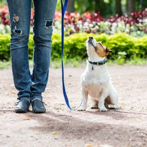 Virtual Dog Training Online Dog Trainer