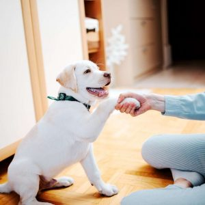 Online Dog Training Articles