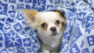 Are electric blankets safe for dogs