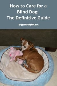 How to care for a blind dog the definitive guide