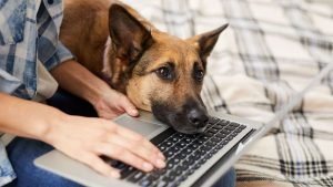 Virtual Dog Training