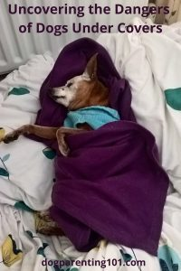 Uncovering the Dangers of Dogs Under Covers