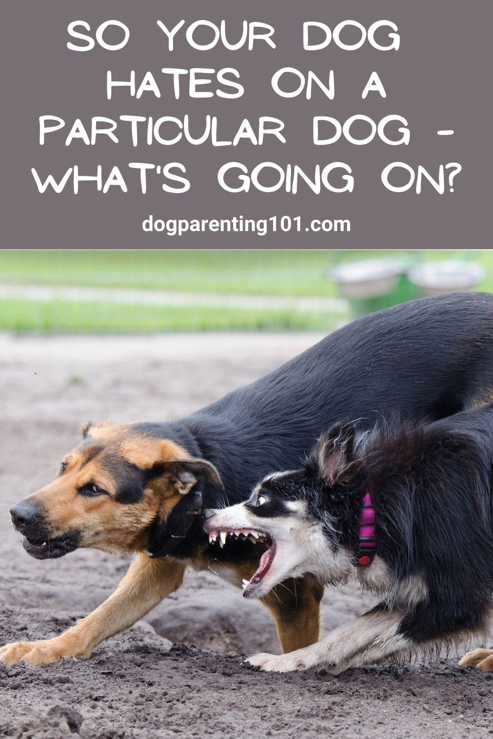 So Your Dog Hates on a Particular Dog What's Going On