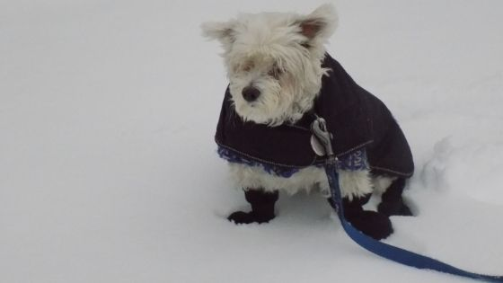 Tips for exercising your dog in the winter